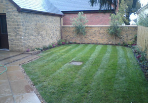 Home garden after turfing grass