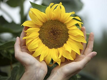 sunflower hands sensory garden