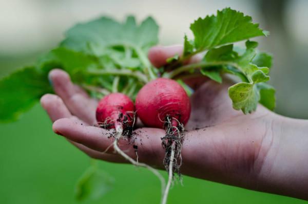 Shoot Gardening - Grow Your Own